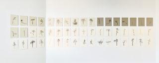 Sanna Korteniemi: Naarmankaira-sarja, 2016–2017, mustekynä paperille, 51 osaa. Kuva: Titus Verhe
